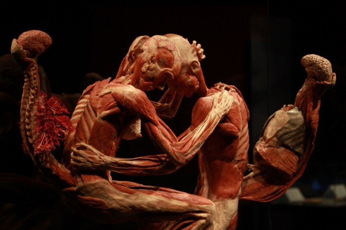 body worlds mostra