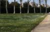 prato delle colonnne, giardino di boboli, firenze