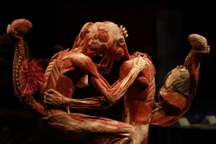 body worlds mostra